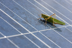 Saltamontes al panel fotovoltaico imagen de archivo