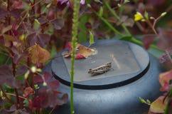 Saltamontes en la lámpara Foto de archivo
