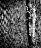 Saltamontes en una pared fotografía de archivo