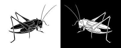 saltamontes Insecto con el diseño y la línea planos versión blanco y negro del arte stock de ilustración