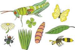 Saltamontes, oruga, mariposa, mosca, avispa, le Imagen de archivo libre de regalías