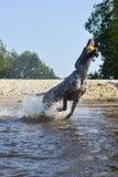 Saltando per una palla Fotografia Stock Libera da Diritti