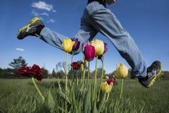 Saltando sopra i tulipani Fotografie Stock