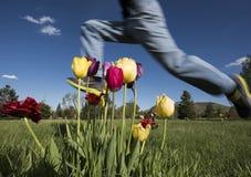 Saltando sopra i tulipani Immagini Stock