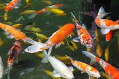 Saltar decorativo brilhante dos peixes da lagoa, Singapura imagem de stock royalty free