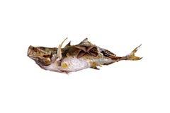 Saltar den japansk mat grillade fisken med Royaltyfri Foto