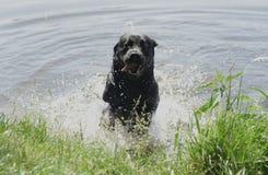 Saltar do cão da água fotografia de stock royalty free