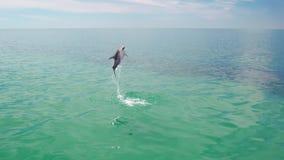 Saltar do golfinho da água filme