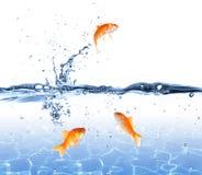 Saltar do peixe dourado da água - escape o conceito fotos de stock