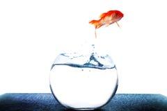 Saltar do peixe dourado do tanque imagens de stock