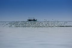 Saltar dos peixes da água Imagem de Stock