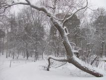Saltare albero Stoccolma, la Svezia Immagine Stock Libera da Diritti