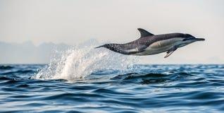 Saltare del delfino dell'acqua Il delfino comune A lungo con becco fotografia stock