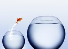 Saltare del Goldfish dell'acqua Fotografie Stock