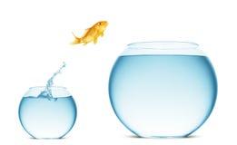 Saltare del Goldfish dell'acqua Fotografia Stock