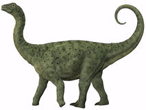 Saltasaurus Juvenile Stock Photos