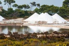 Saltdam i Mallorca Arkivfoto
