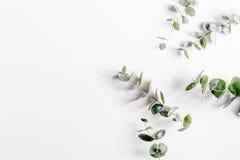 Salte con morden la maqueta herbaria en la opinión superior del fondo blanco Foto de archivo libre de regalías