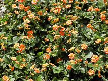 Salte en el jardín botánico del ` s de Zagreb, flora, 4 fotos de archivo