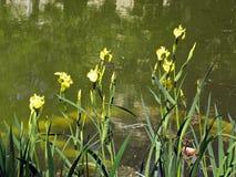 Salte en el jardín botánico del ` s de Zagreb, flora, 13 imagen de archivo libre de regalías