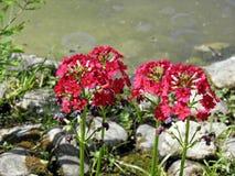 Salte en el jardín botánico del ` s de Zagreb, flora, 14 imagenes de archivo