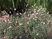 Salte en el jardín botánico del ` s de Zagreb, flora, 16 imagenes de archivo
