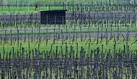 Salte en las huertas y los viñedos de Moravia del sur Foto de archivo libre de regalías