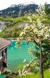 Salte en las montañas de las montañas, región de Jungfrau, Suiza Foto de archivo libre de regalías