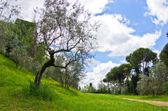 Salte en Toscana, un paseo en parque cerca de San Gimignano Fotos de archivo libres de regalías
