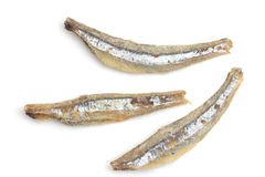 Salted anchovies on a white background Stock Image