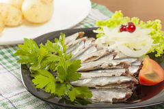 Salted anchovy without head Stock Image