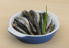 Salted anchovy. With spices and herbs - ready for eat Stock Images