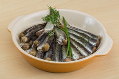 Salted anchovy. With spices and herbs - ready for eat Royalty Free Stock Photography
