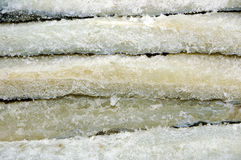 Salted cod Stock Image