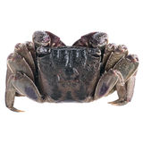 Salted Crab  Royalty Free Stock Photo