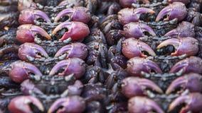 Salted crab at Thai street food market Royalty Free Stock Photos