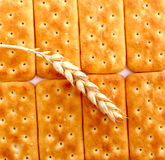 Salted crackers. Picture of a wheat ear on a texture of a salted crackers Stock Image