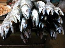 Salted Dorab Wolf-Herring. Dried Salted Dorab Wolf-Herring Stock Image