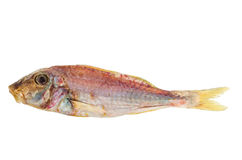 Salted and dried Red mullet fish Stock Photography