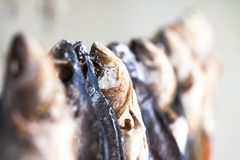 Salted dried fish for sale Royalty Free Stock Photos