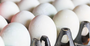 Salted duck eggs Stock Photography