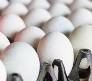 Salted duck eggs Royalty Free Stock Photos