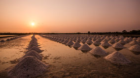Salted farm in Thailand Stock Images
