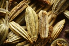 Salted Fennel macro Stock Photos
