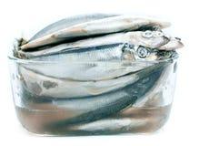 Baltic herring on white background Royalty Free Stock Image