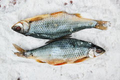 Salted fish Stock Images