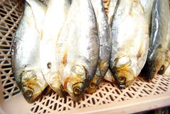 Salted fish Stock Image