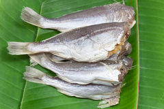 Salted fish Royalty Free Stock Photos