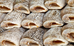 Salted fish. In the market Thailand Royalty Free Stock Photo