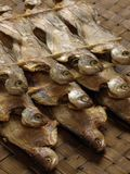 Salted fish. On straw mat Royalty Free Stock Photos
